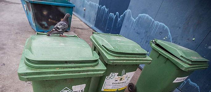 Волков — о вывозе мусора в СТ