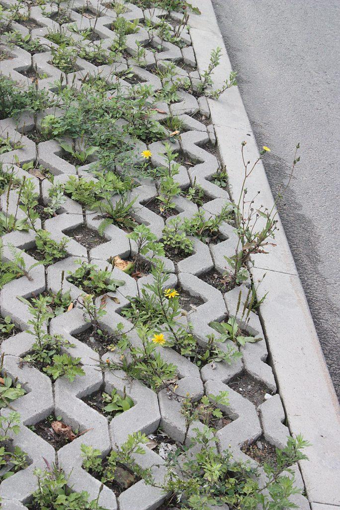 Кто скосит траву на тротуаре?