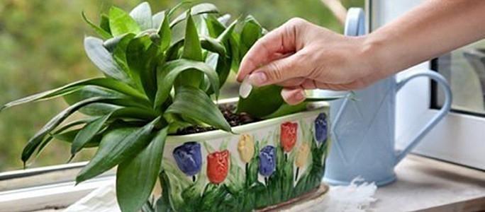 Пусть твои растения скажут «спасибо»!