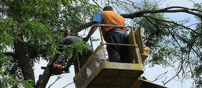 О весеннем зуде спиливания деревьев в Нарве