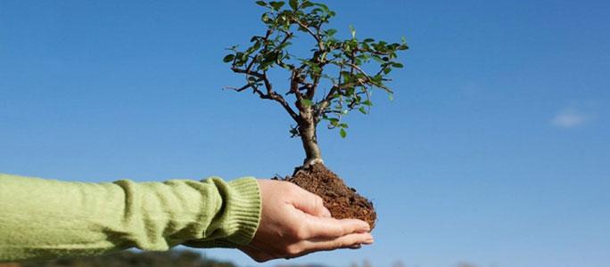 СН-2016: На земле Эстонии будет расти твое дерево