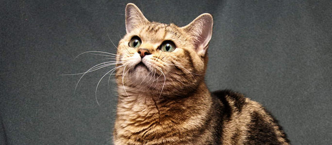 Город оплатит чипование ста домашних собак и кошек