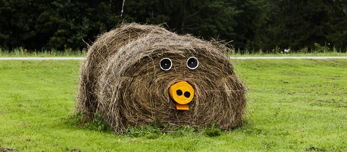 Сельское хозяйство Ида-Вирумаа:  «и сгинуть ничто не мешает ему...»
