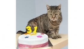 Самому старому в мире коту исполнился 31 год!
