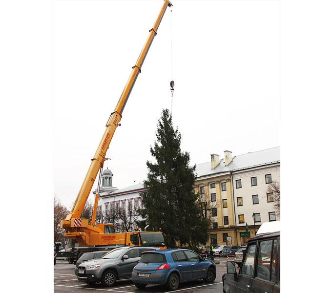 +Видео. Рождественская ель прибыла из района нарвских садоводств