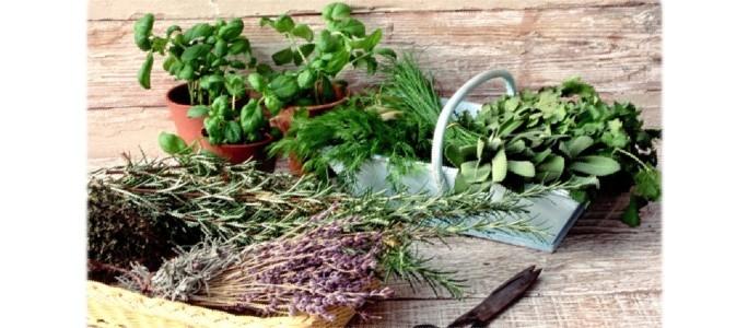 Пряные травы, которые можно выращивать дома