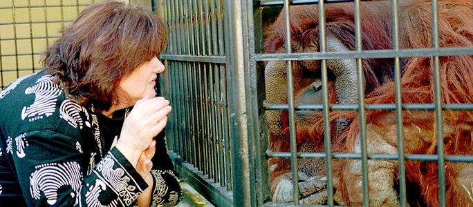 В Атланте умер орангутан, первым выучивший язык жестов