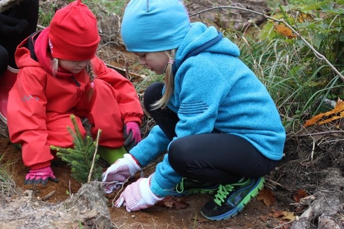 Хватит детям и внукам: как растут наши леса
