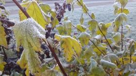 +Галерея. Морозное утро в Нарве