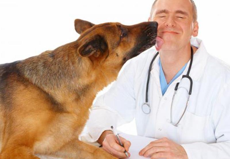 Инспекция труда проверила охрану здоровья работников  в ветеринарных клиниках