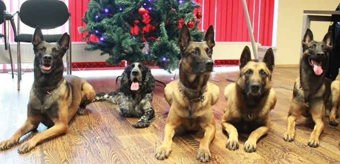 Коллеги торжественно проводили на пенсию служебную собаку Аргуса