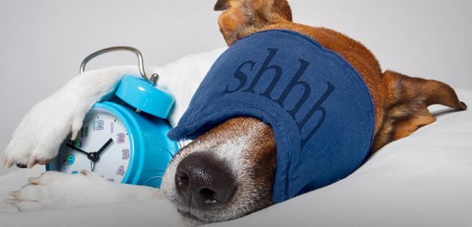 Почему лучше не стараться приучить себя вставать рано