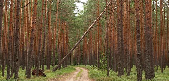 Холода не могут немедленно исправить положение - союзы лесного хозяйства