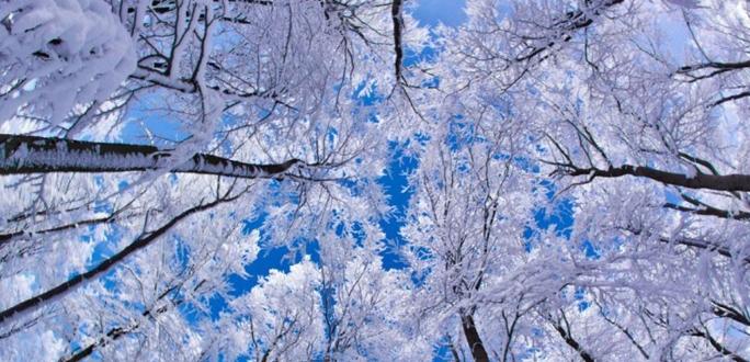 Январь был теплее среднестатистического 31215fa7e4e