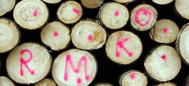 Неравнодушные жители Нарва-Йыэсуу приглашаются на встречу по вопросу вырубок в государственном лесу