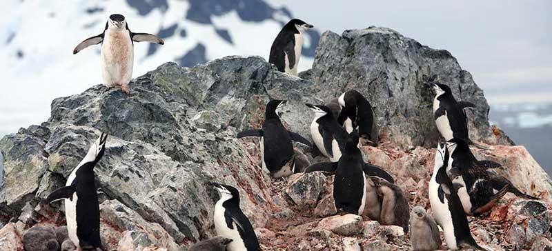 В Антарктиде пингвины утащили оборудование латвийских исследователей