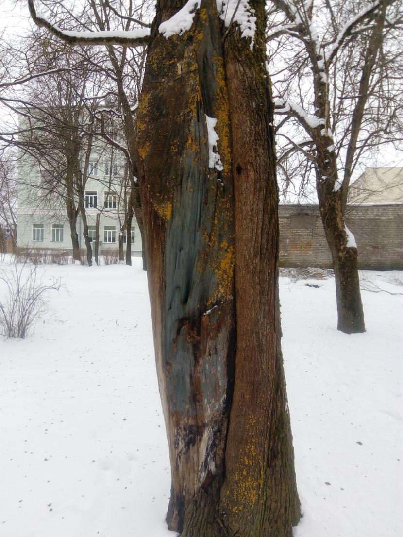 Очистка от старых деревьев парка у ДК Герасимова началась