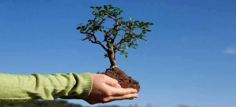 Посадить свой дуб