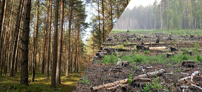 30 апреля - последний день, когда можно поставить подпись в защиту леса