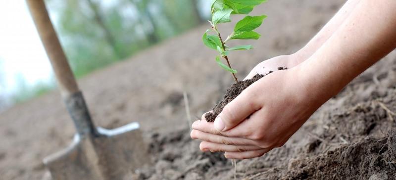 Посадите свое дерево на толоке в Äkkeküla!