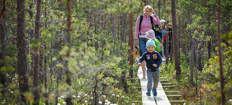 RMK проведет день знакомство с лесным сектором