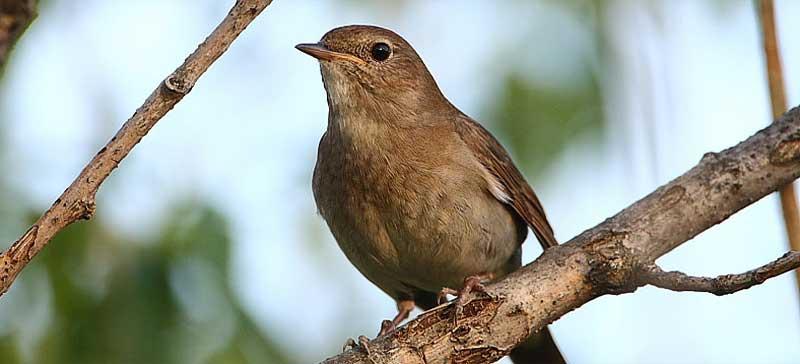 Уроки весенних птичьих песнопений