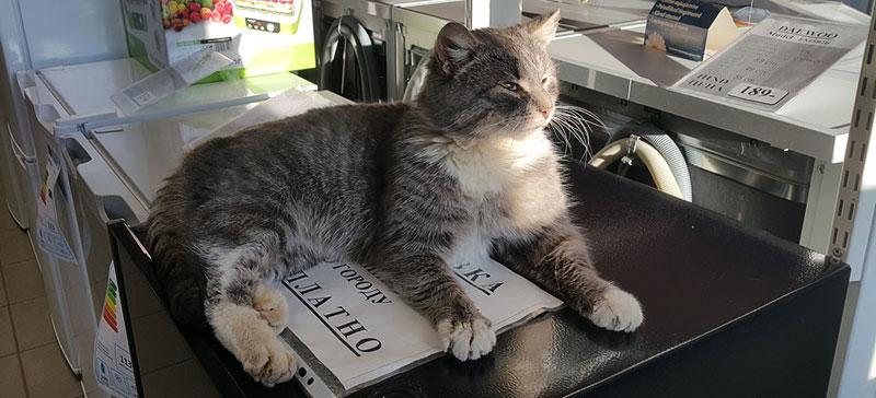 Две истории об одной ветклинике: «Ветеринар залечил кота до смерти»