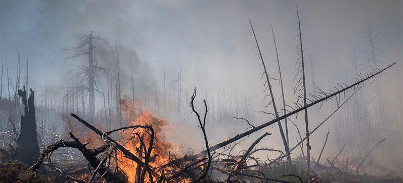 Лесной пожар в Википалу занимает уже около 200 гектаров