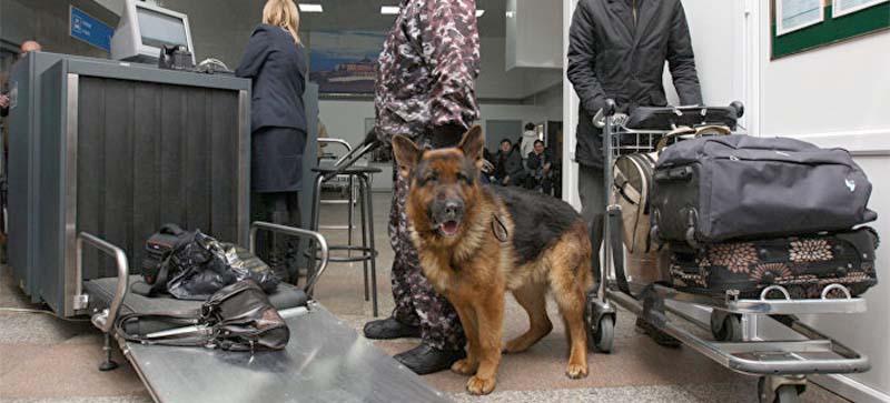 За голову унюхавшей тонны кокаина собаки предложили 70 тысяч долларов