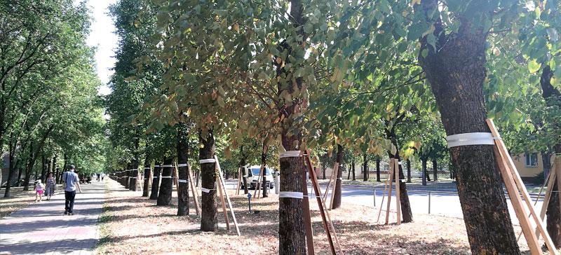 Велодорожка пройдет между деревьями