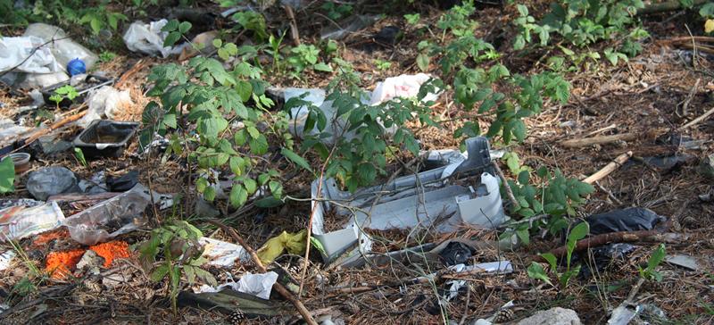 ОПРОС. Что нужно сделать, чтобы люди перестали выбрасывать мусор в лес?