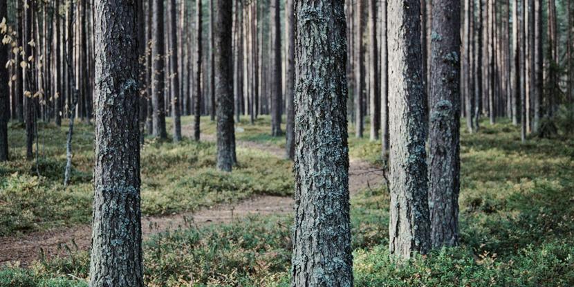 Силы обороны просят грибников и ягодников быть внимательными вблизи мест проведения учений