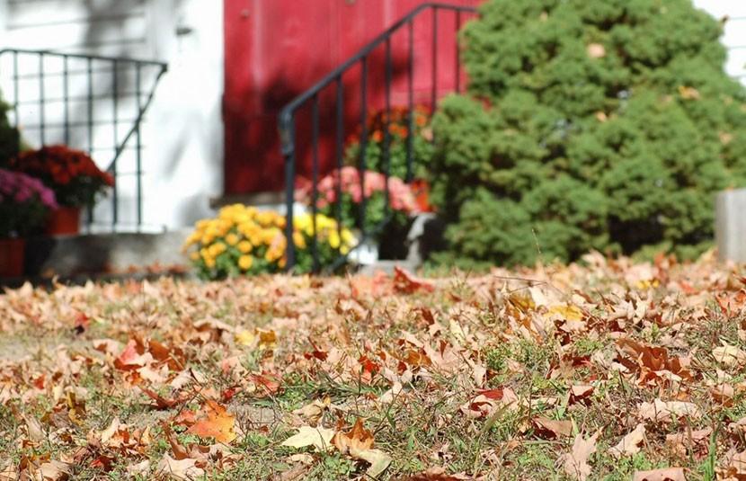 5 ошибок, которые совершают многие дачники осенью