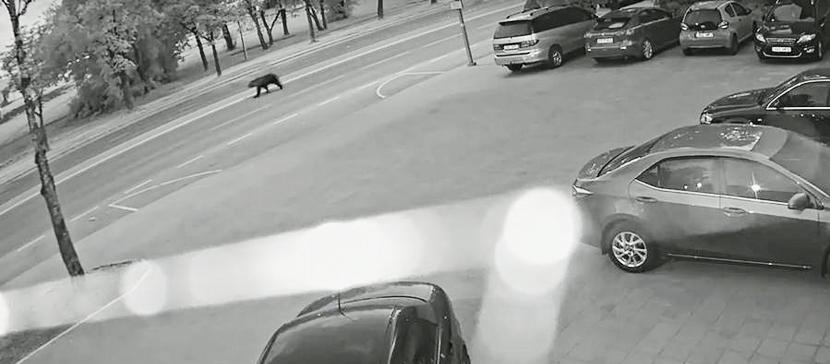 Дикие животные в городе: что делать?