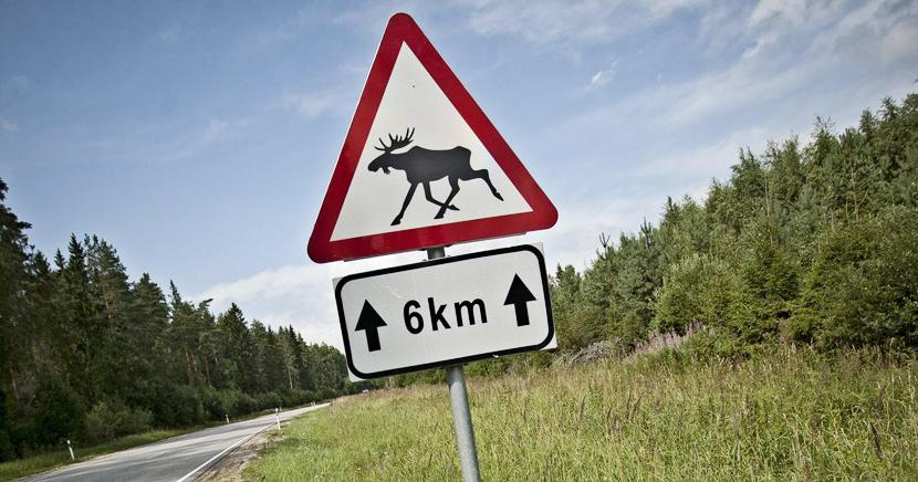 Где случается больше всего автомобильных аварий, связанных со столкновениями с дикими животными?