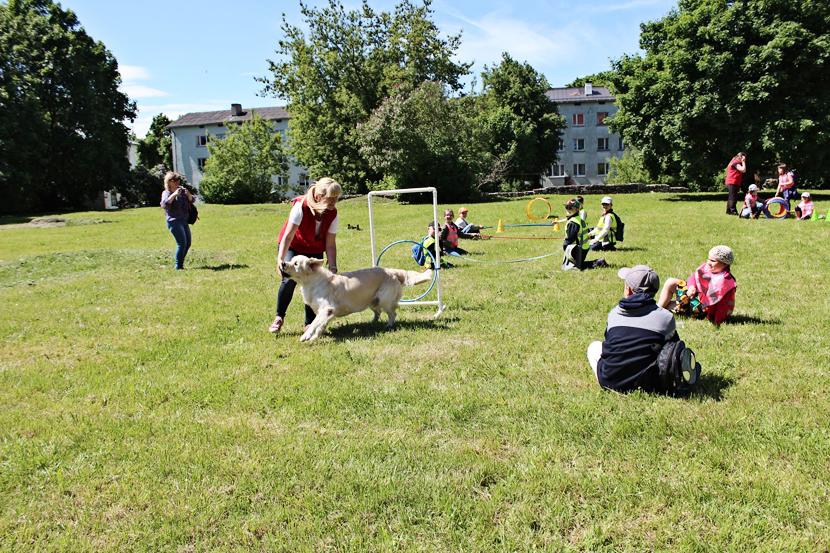 Депутаты: собак - в намордник и на поводок! Почему собаководы против