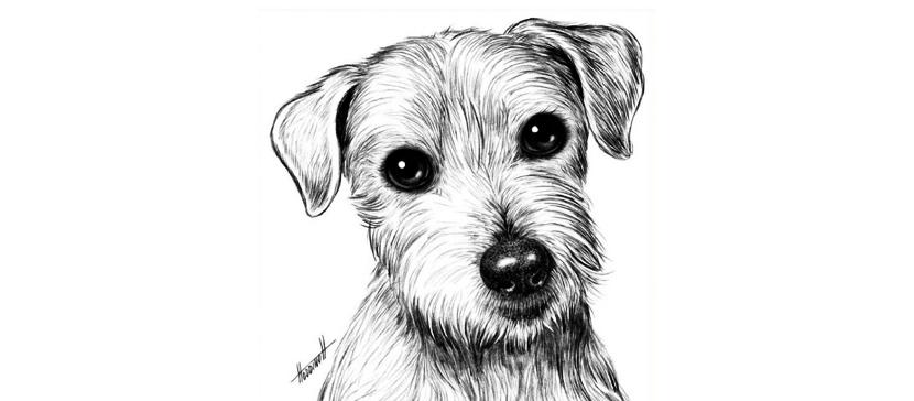 Смотрите рисунки участников, присланные на конкурс «Наши домашние любимцы»!