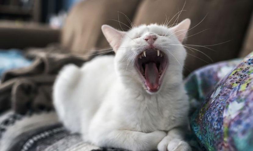 В Нарве стартует бесплатная стерилизация кошек и кастрация котов