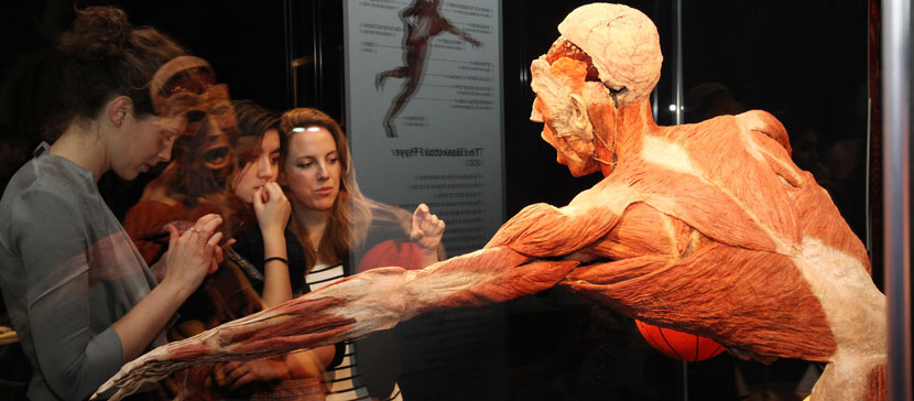 В Эстонию приезжает всемирно известная выставка человеческих тел Body Worlds. Тела настоящие