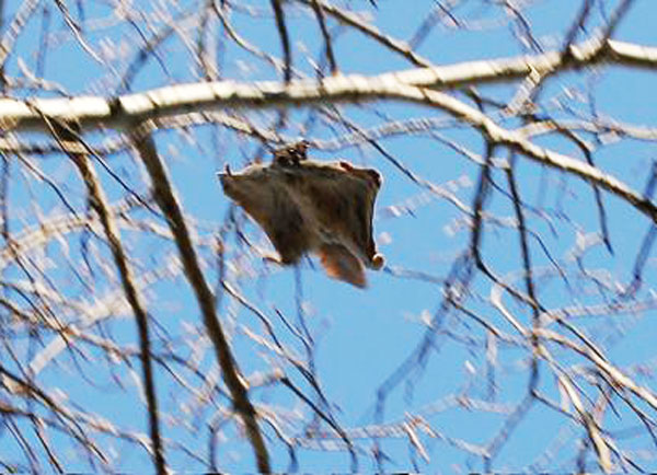Президент без дела не сидит! Керсти Кальюлайд посетила место обитания белки-летяги