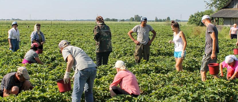 Безработным разрешат подрабатывать. Пособия не лишат