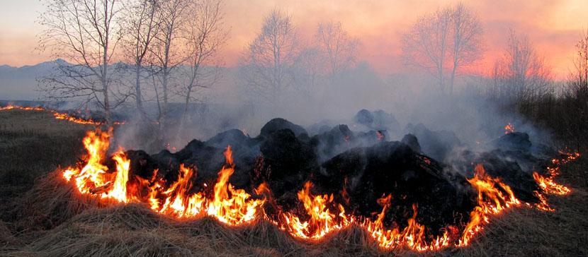 В апреле спасатели тушили 156 пожаров на открытой местности