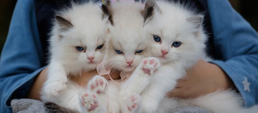 На улицы Чикаго выпустили тысячу кошек для борьбы с крысами