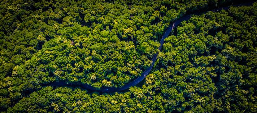 Люди, жившие в джунглях Амазонии, оставляли их нетронутыми тысячи лет