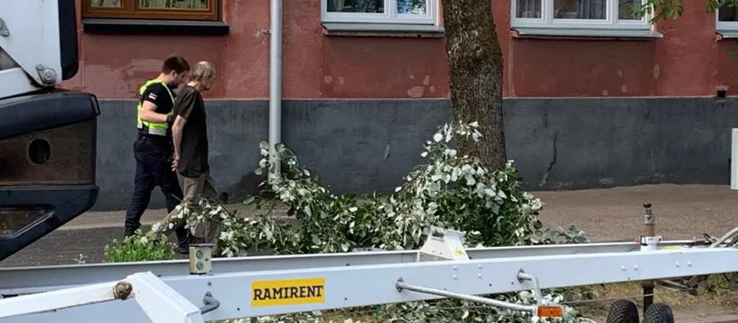 В Нарве недовольный спиливанием веток пьяный горожанин угрожал рабочим